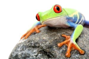 Frog on Globe