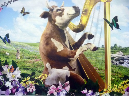 The cow with the golden harp